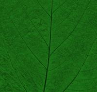 Pastel Leaf 10