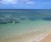 Waikiki Snorkelers