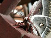 Moth on Wheel