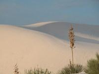 Dunes (white sands)