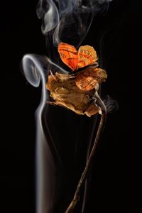 Buterfly 1