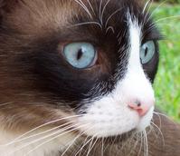 Curious Cat 1