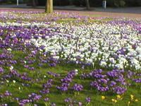 spring inHolland