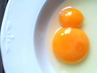 huevo con dos yemas