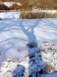 shadow - tree