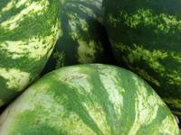 Farmers Market - Melons