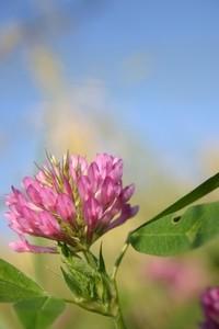 wild flowers 16