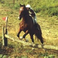 Equestrian Event 5