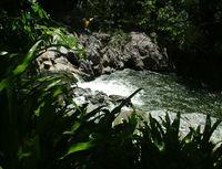 Crystal Cascades, Cairns. 1