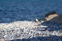 shell rocks