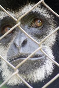 Sad face Monkey