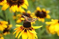 butterflyl, flower