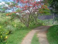 Way flowered trees