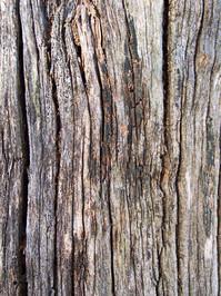 texture - wooden powerpole