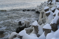 Black Sea waves and frozen in winter 1