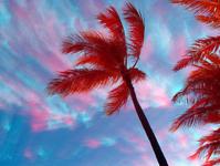 IR Palms