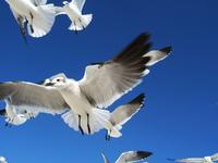 Seagulls 8