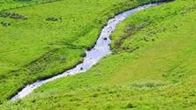 Lyne Water, Scottish Borders