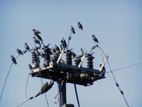 birds 0 2