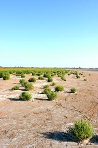 camargue landscape 1