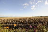 Dutch Countryside 4