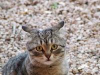 Cats 5