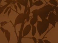 shadows 04