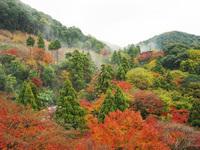 Autumn in Kyoto 4