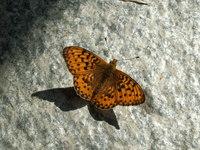 Bu Bu Butterfly