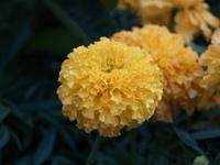 Flower in Bangkok