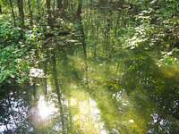 forest pond reflections