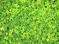 leaf carpet