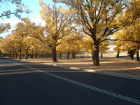 Autumn in Australia 3
