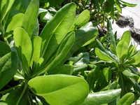 tropical plant + beach