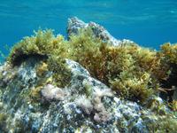 Underwater landscape 1