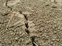 Dirt Crevice 1