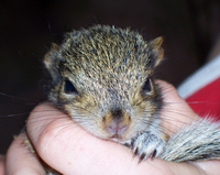 Squigy the Squirrel