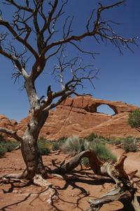 Arches national park - Moab . Utah - Usa