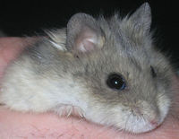 Jam Hamster J