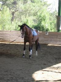 Freedom Teaching a horse