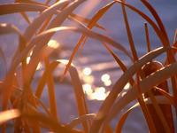 Marshland Sparkle