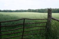 Wheat Field Gate