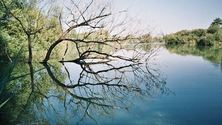 Dead Wood reflection