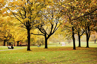 London Park 1