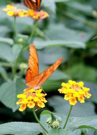 Butterfly_ 2