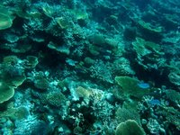 House Reef 1