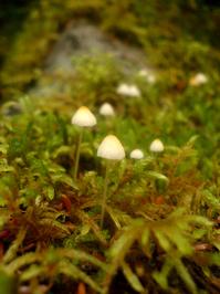Mushrooms - nature's bounty 4