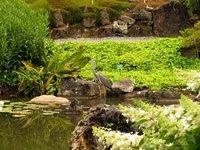 Garden and heron