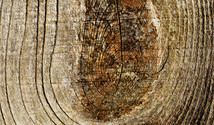 Weathered oak 1