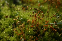 Moss in Macro 1